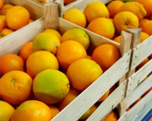 oranges confites bio